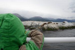 Den Seelöwen ganz nah vor Ushuaia, Feuerland