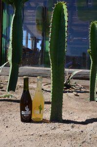 Kaktusbiere des Elqui-Tals