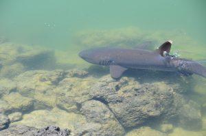 Schnorcheln mit den Haien; Angst- und Glücksgefühlliegen so nahe beieinander